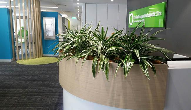 Indoor office plants green spaces office - Indoor desk plants ...