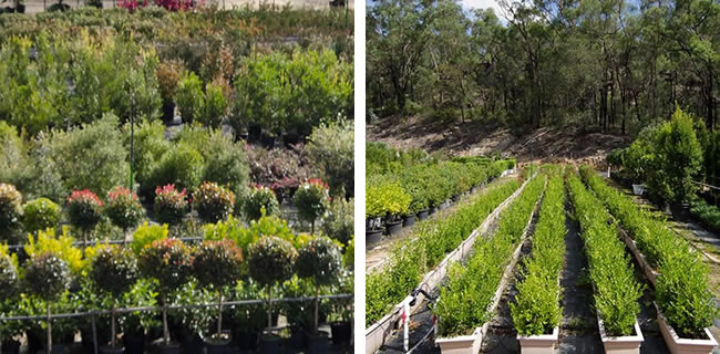 10000 plants for hire