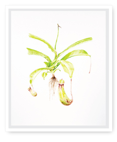 botanical art framed