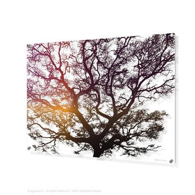 tree perspex art signarture burrawang