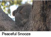 peaceful snooze