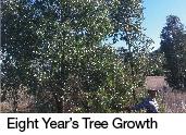 eight years tree growth