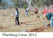 planting crew 2012