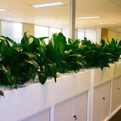 plantscape
