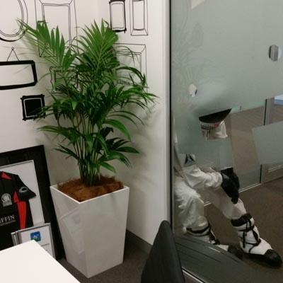 indoor office plants