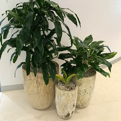 earthern planter cone janet craig spath