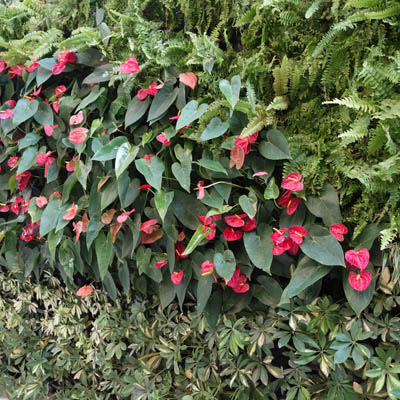 external green wall planting