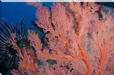 canvas art marine