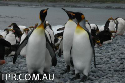 image gallery antarctica