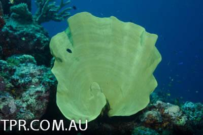 image gallery marine