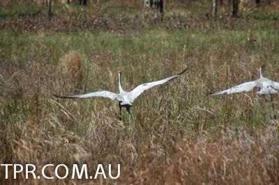 image gallery wildlife