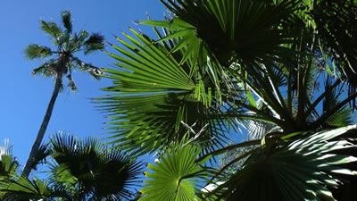 palm gully